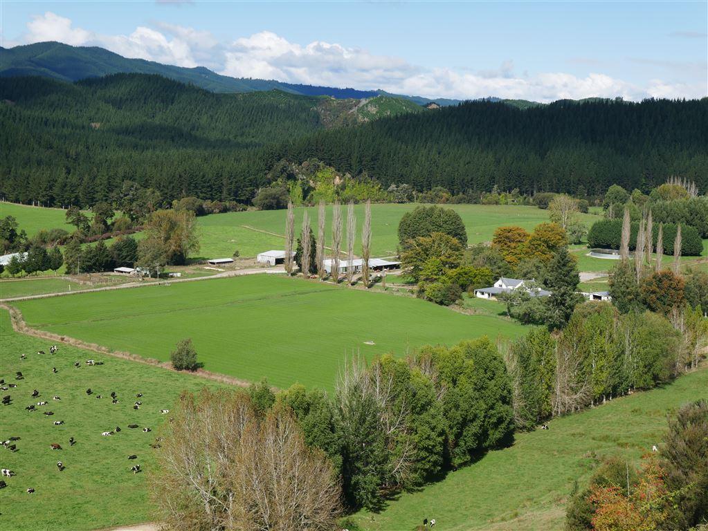 Dairy in Tasman -  Twin Oaks