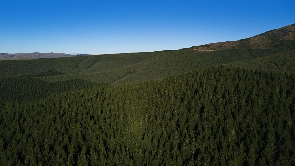 Southland Forestry Investment