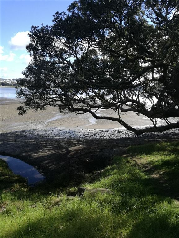 Pohutukawa tree on beach accessed via the subdivision walkway
