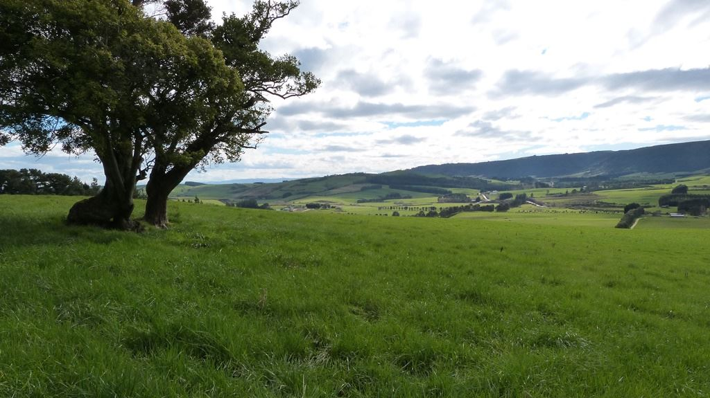 Ideal Dairy Grazing or Sheep and Beef