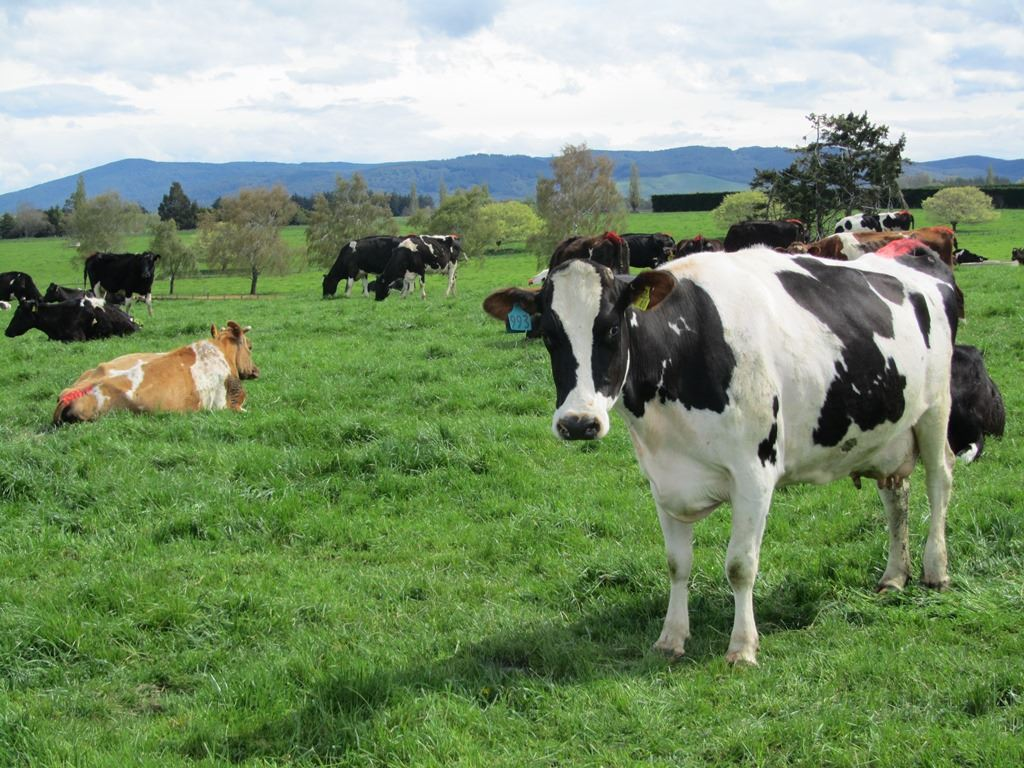 Central Southland Dairy Unit