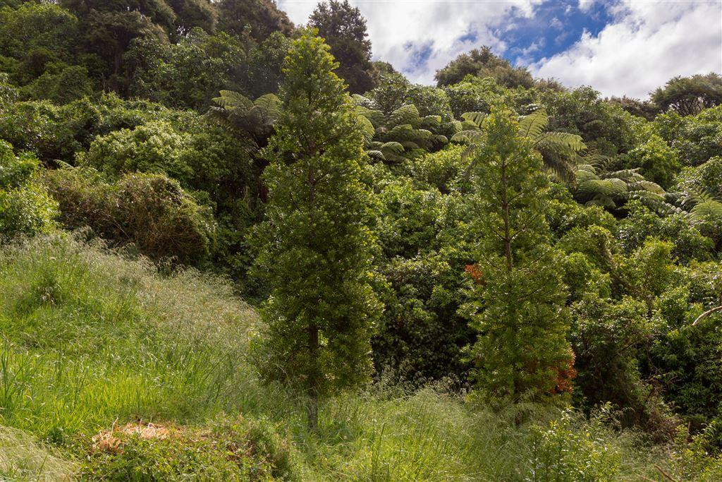 Kauri Grove