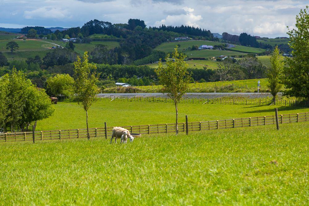 Western views across the rolling green hills of Matakana