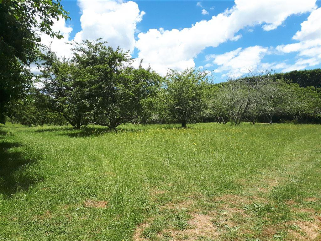 Flat Hort Land Close To Town