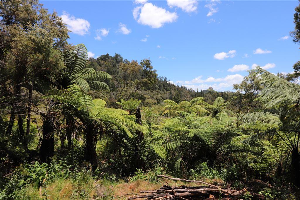 Coastal Living in Whangaroa