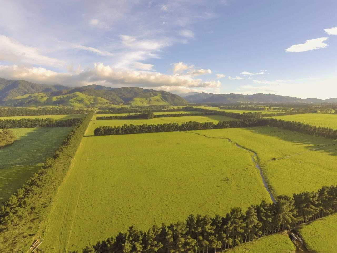A Golden Opportunity in Greytown - 82.43ha