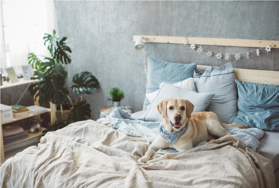 Pets in your investment property