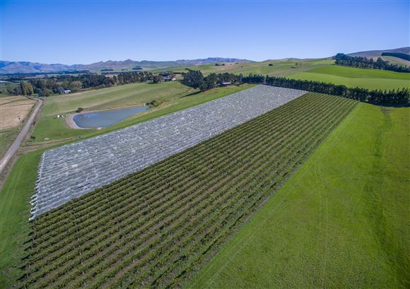Producing Vineyard, Superb Lifestyle Opportunity