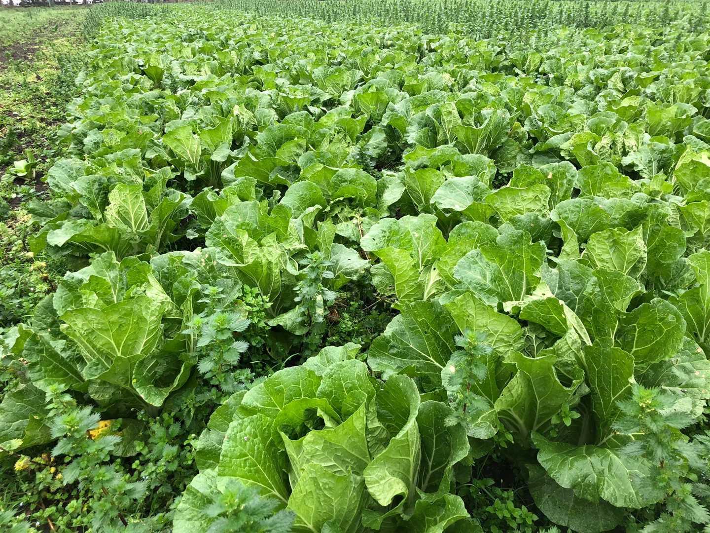 Current crops.