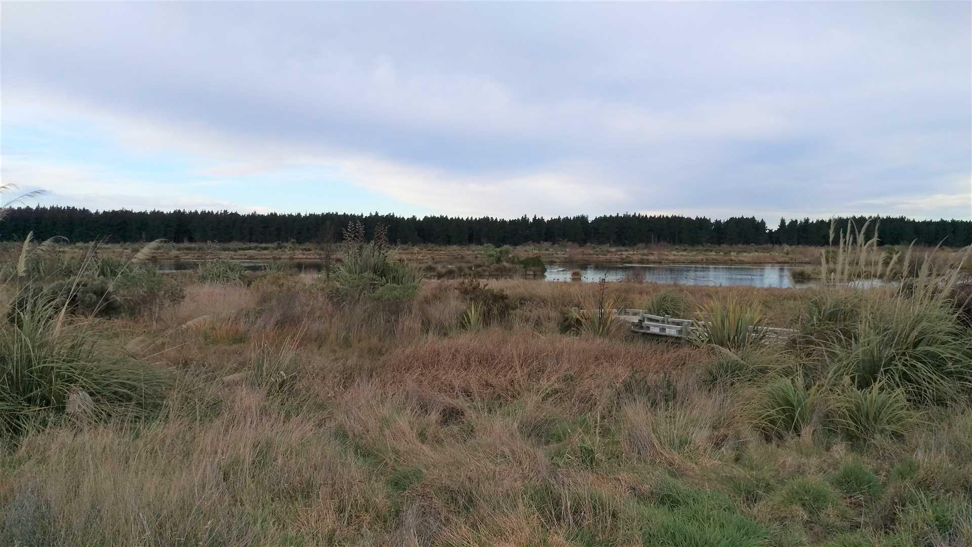 Fantastic Wetlands View